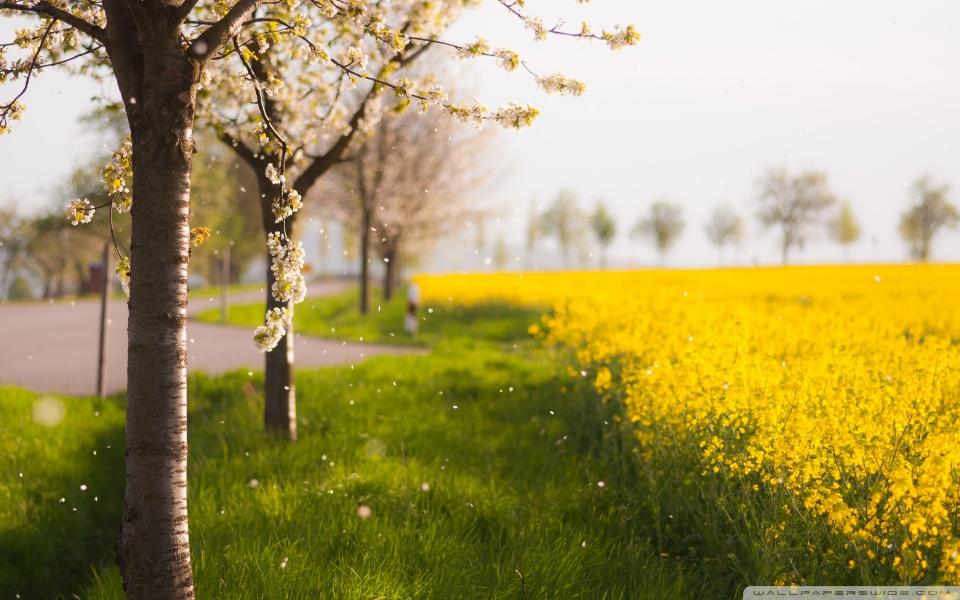 raining_petals-wallpaper-960x600